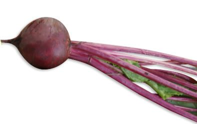 Carrfields Frodo Hybrid Beetroot – WJ107 - Winseed International
