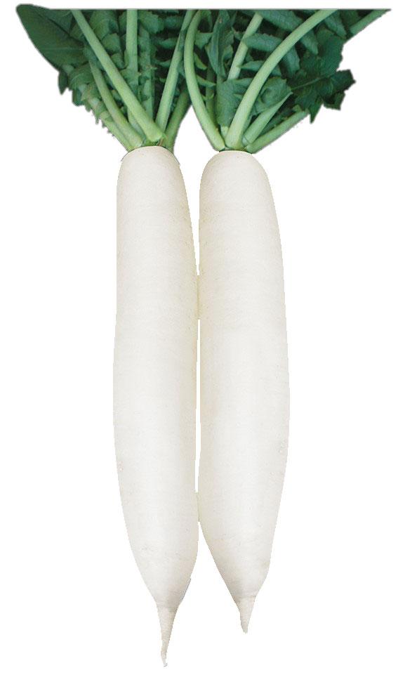 Carrfields Flynn Hybrid mino radish WR125 - Winseed International